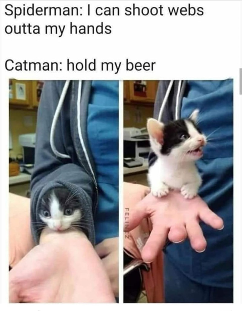 Cat - Spiderman: I can shoot webs outta my hands Catman: hold my beer FELINEZ