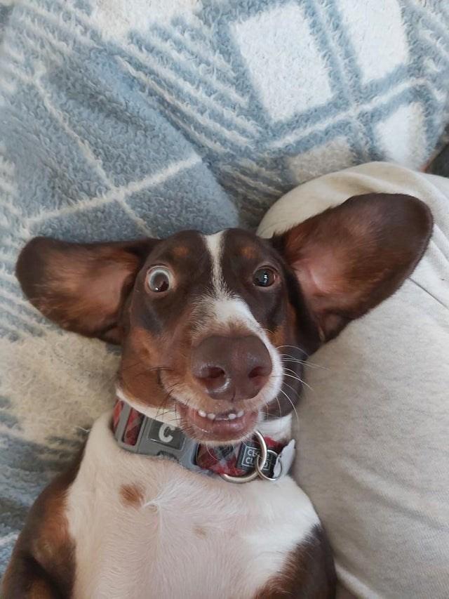Dog - tera