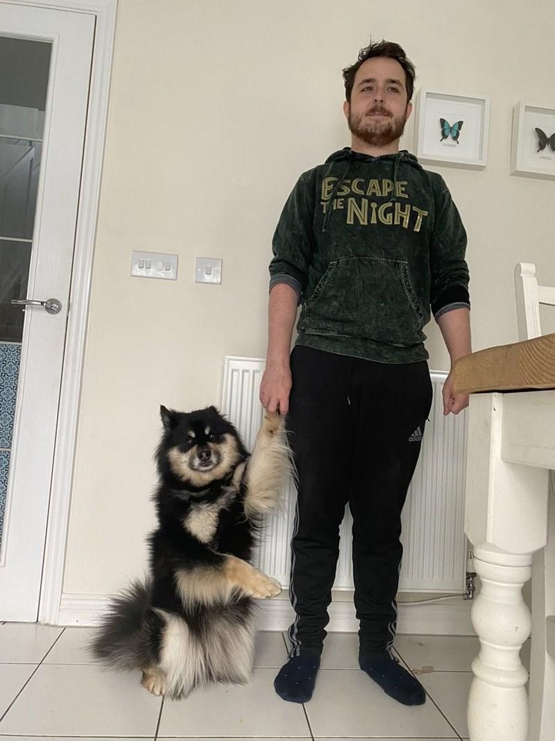 Dog - ESCAPE NIGHT