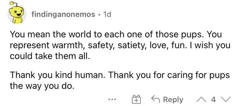 Font - findinganonemos · 1d You mean the world to each one of those pups. You represent warmth, safety, satiety, love, fun. I wish you could take them all. Thank you kind human. Thank you for caring for pups the way you do. G Reply A 4 V +