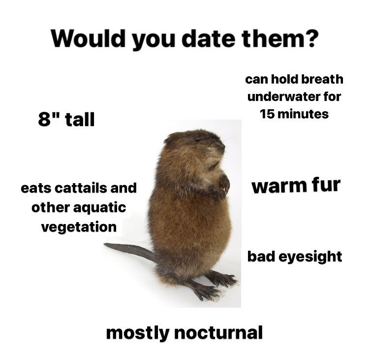 """Fawn - Would you date them? can hold breath underwater for 15 minutes 8"""" tall eats cattails and warm fur other aquatic vegetation bad eyesight mostly nocturnal"""