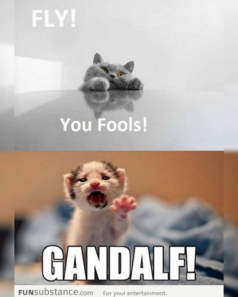 Dog - FLY! You Fools! GANDALF! FUNSubstance.com For your entertainment.