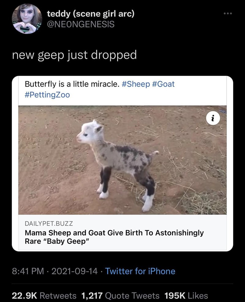 """Organism - teddy (scene girl arc) @NEONGENESIS ... new geep just dropped Butterfly is a little miracle. #Sheep #Goat #PettingZoo i DAILYPET.BUZZ Mama Sheep and Goat Give Birth To Astonishingly Rare """"Baby Geep"""" 8:41 PM · 2021-09-14 · Twitter for iPhone 22.9K Retweets 1,217 Quote Tweets 195K Likes"""