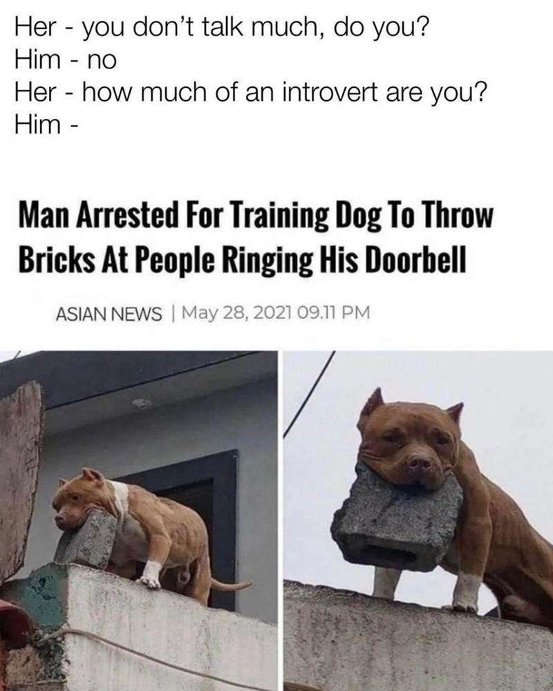 Dog - Her - you don't talk much, do you? Him - no Her - how much of an introvert are you? Him - Man Arrested For Training Dog To Throw Bricks At People Ringing His Doorbell ASIAN NEWS | May 28, 2021 09.11 PM