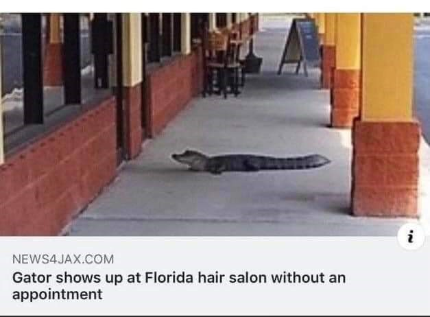 Property - i NEWS4JAX.COM Gator shows up at Florida hair salon without an appointment