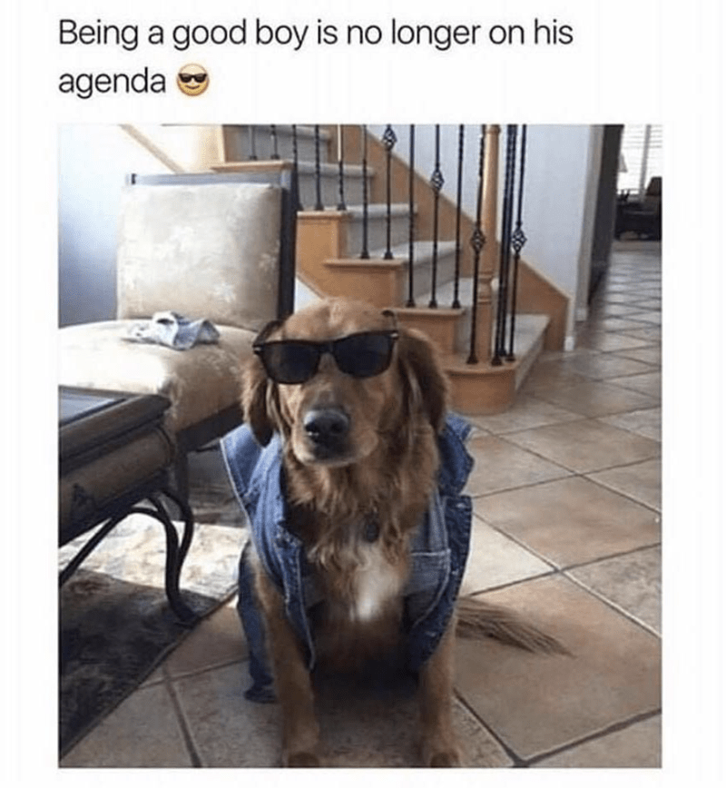 Dog - Being a good boy is no longer on his agenda e