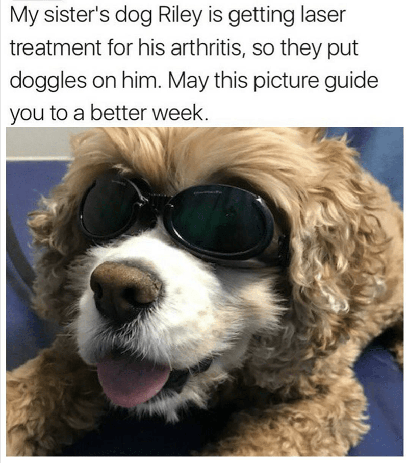 Glasses - My sister's dog Riley is getting laser treatment for his arthritis, so they put doggles on him. May this picture guide you to a better week.