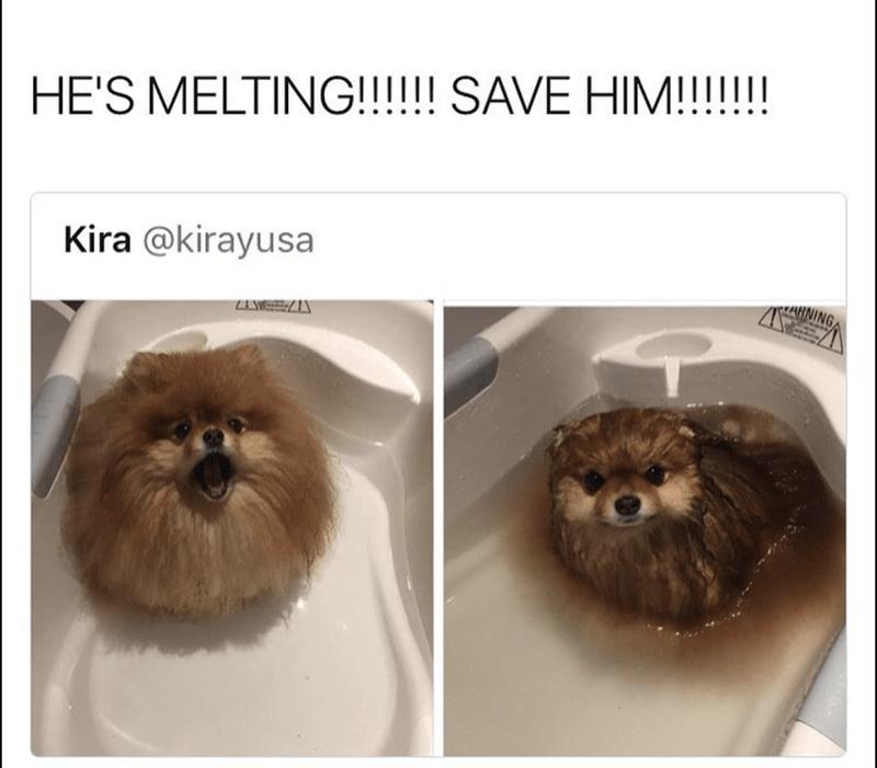 Brown - HE'S MELTING!!!!!! SAVE HIM!!!!!! Kira @kirayusa RNING