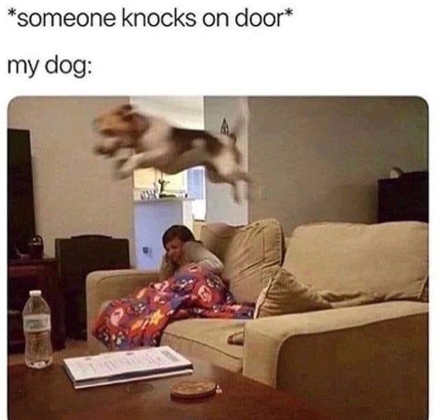 Property - *someone knocks on door* my dog: