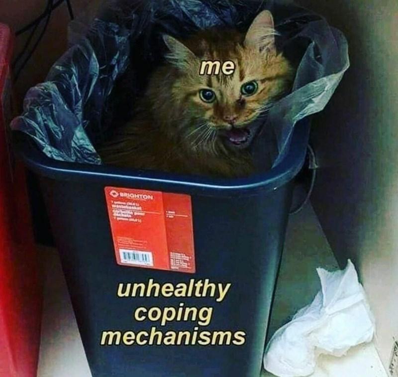 Cat - me BRIGHTON wastefuasiot orbe unhealthy сoping mechanisms