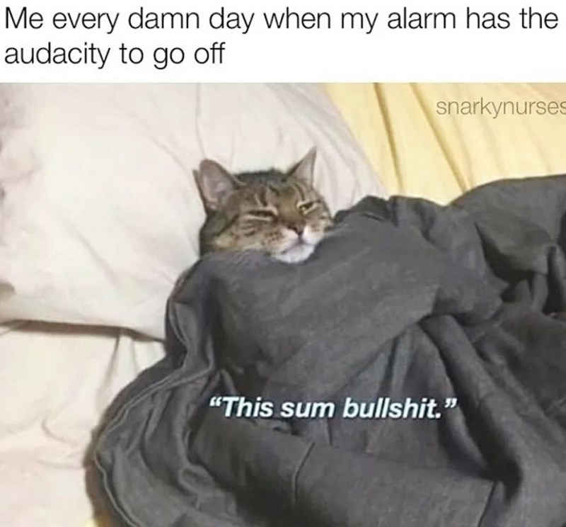 "Cat - Me every damn day when my alarm has the audacity to go off snarkynurses ""This sum bullshit."""