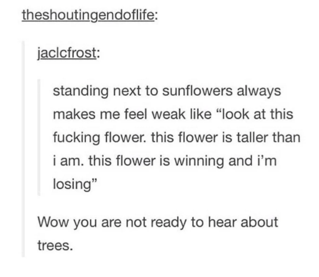 """Font - theshoutingendoflife: jaclcfrost: standing next to sunflowers always makes me feel weak like """"look at this fucking flower. this flower is taller than i am. this flower is winning and i'm losing"""" Wow you are not ready to hear about trees."""