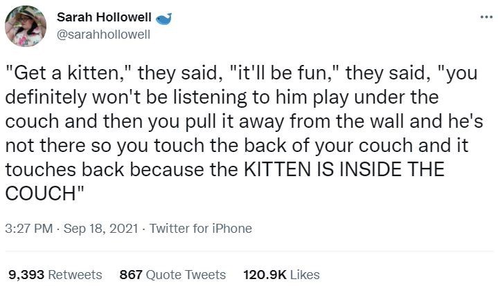 """Font - Sarah Hollowell ... @sarahhollowell """"Get a kitten,"""" they said, """"it'll be fun,"""" they said, """"you definitely won't be listening to him play under the couch and then you pull it away from the wall and he's not there so you touch the back of your couch and it touches back because the KITTEN IS INSIDE THE COUCH"""" 3:27 PM Sep 18, 2021 - Twitter for iPhone 9,393 Retweets 867 Quote Tweets 120.9K Likes"""