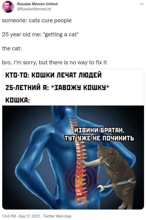 Sleeve - Russian Memes United ... @RussianMemesLtd someone: cats cure people 25 year old me: *getting a cat* the cat: bro, I'm sorry, but there is no way to fix it КТо-То: Кошки ЛЕЧАТ ЛЮДЕЙ 25-ЛЕТНИЙ Я: *ЗАВОЖУ КОШКУ* КОШКА: ИзвинИ БРАТАН, ТУТ ЕЖЕ НЕ ПОЧИнить 1:54 PM Sep 17, 2021 Twitter Web App
