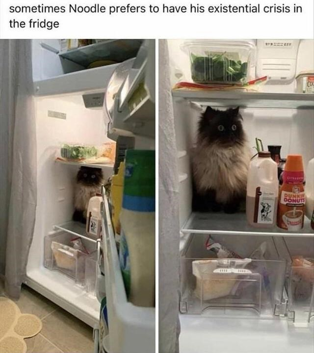 Cat - sometimes Noodle prefers to have his existential crisis in the fridge DUNKI DONUT