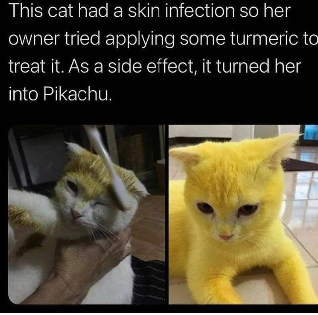 Cat - This cat had a skin infection so her owner tried applying some turmeric to treat it. As a side effect, it turned her into Pikachu.
