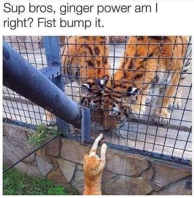 Plant - Sup bros, ginger power am I right? Fist bump it.