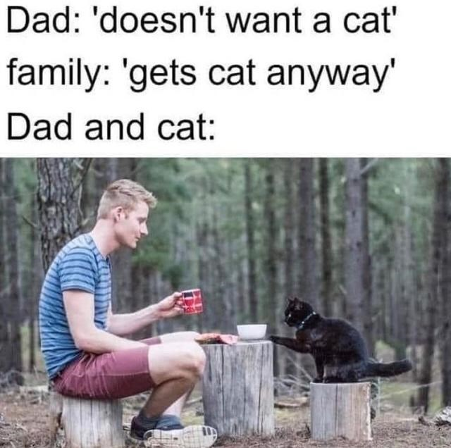 Dog - Dad: 'doesn't want a cat' family: 'gets cat anyway' Dad and cat: