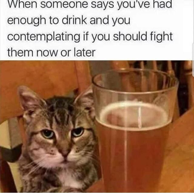 Cat - When someone says you've had enough to drink and you contemplating if you should fight them now or later