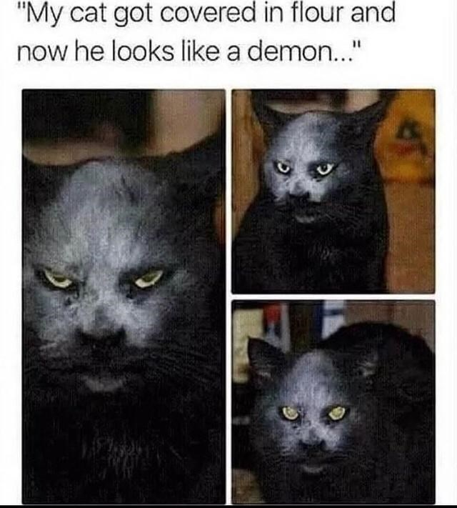 """Cat - """"My cat got covered in flour and now he looks like a demon..."""" %3D"""