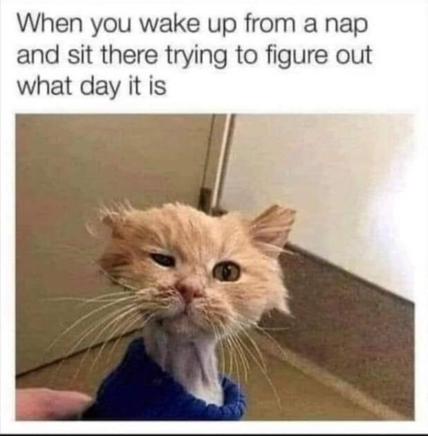 Cat - When you wake up from a nap and sit there trying to figure out what day it is