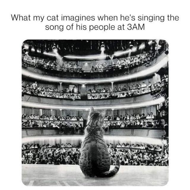 Cat - What my cat imagines when he's singing the song of his people at 3AM