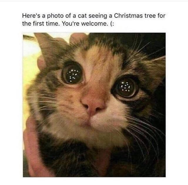 Cat - Here's a photo of a cat seeing a Christmas tree for the first time. You're welcome. (: