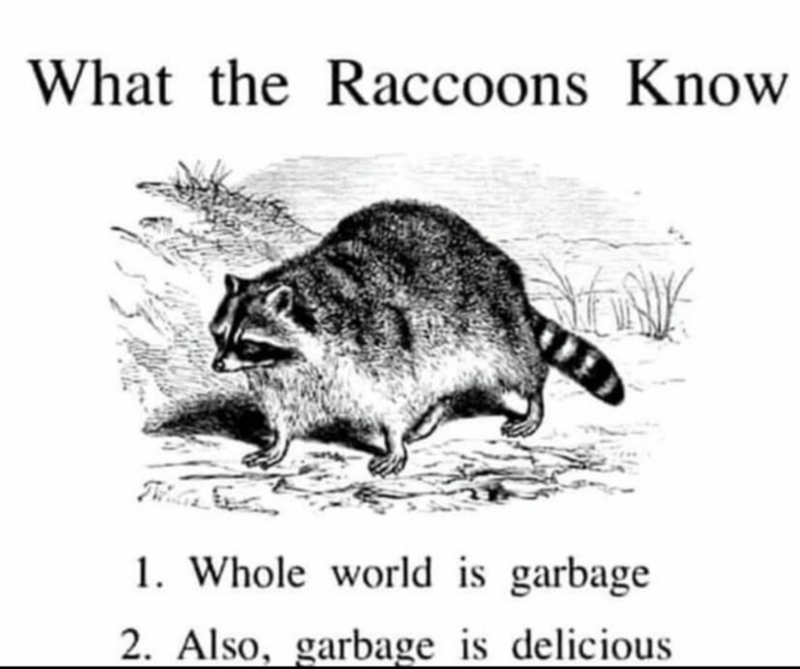 Organism - What the Raccoons Know 1. Whole world is garbage 2. Also, garbage is delicious