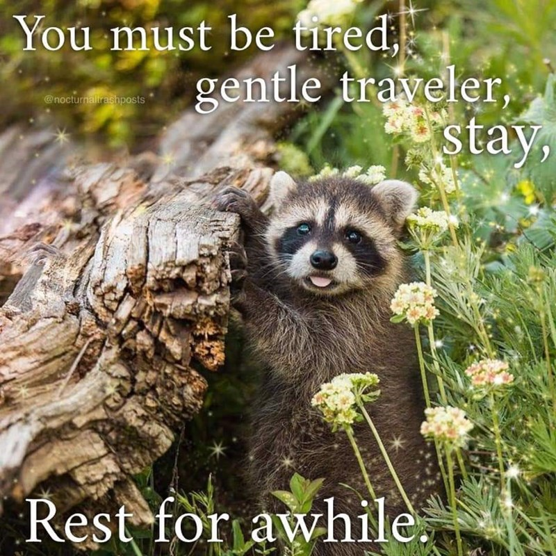 Plant community - You must be tired, gentle traveler, stay, @nocturnalirashposts Rest for awhile