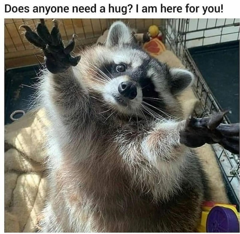Photograph - Does anyone need a hug? I am here for you!