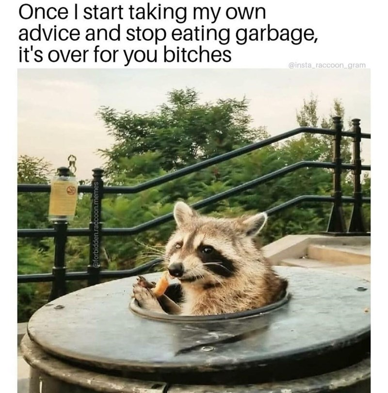 Dog - Once I start taking my own advice and stop eating garbage, it's over for you bitches @insta_raccoon_gram