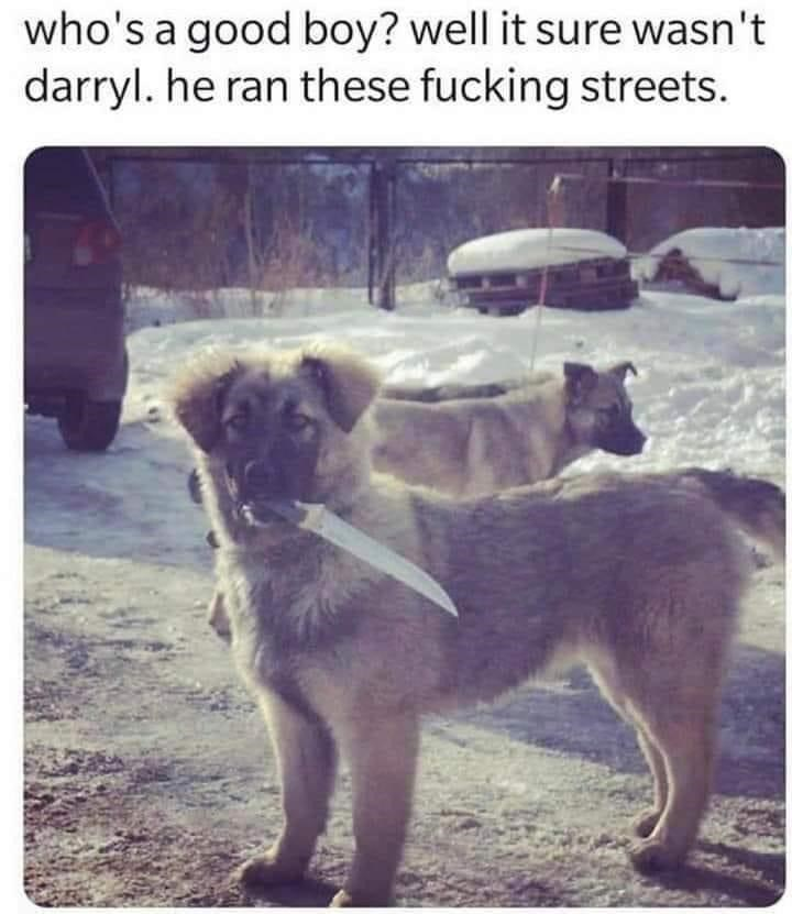 Dog - who's a good boy? well it sure wasn't darryl. he ran these fucking streets.