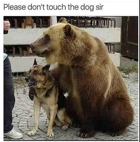 Brown bear - Please don't touch the dog sir