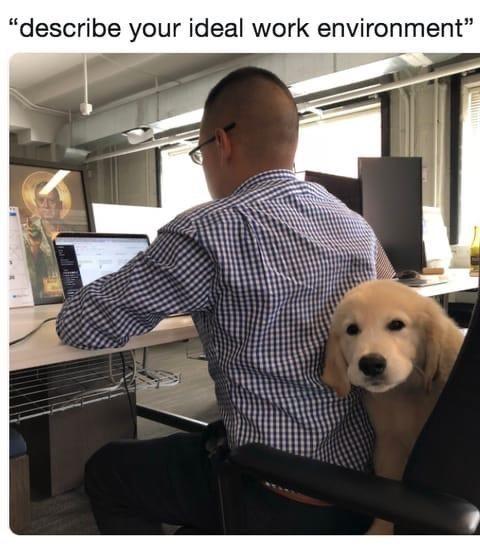 """Dog - """"describe your ideal work environment"""""""