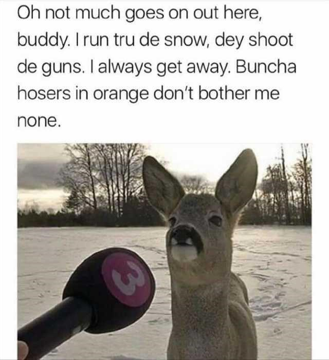 Nature - Oh not much goes on out here, buddy. I run tru de snow, dey shoot de guns. I always get away. Buncha hosers in orange don't bother me none.