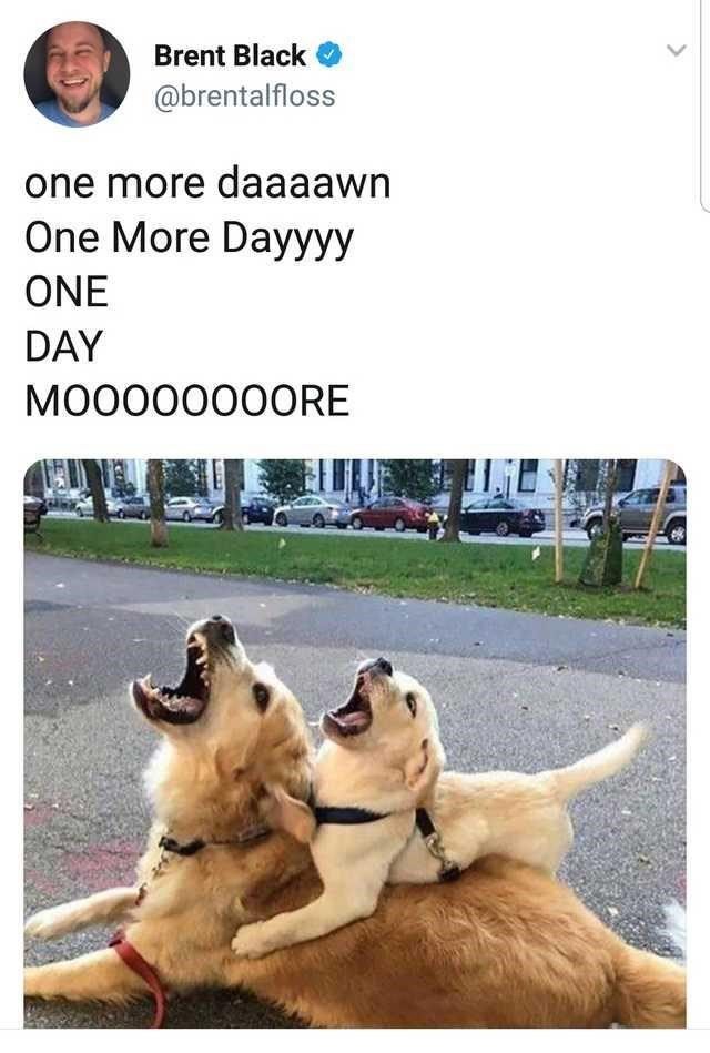 Dog - Brent Black @brentalfloss one more daaaawn One More Dayyyy ONE DAY MO0000000RE