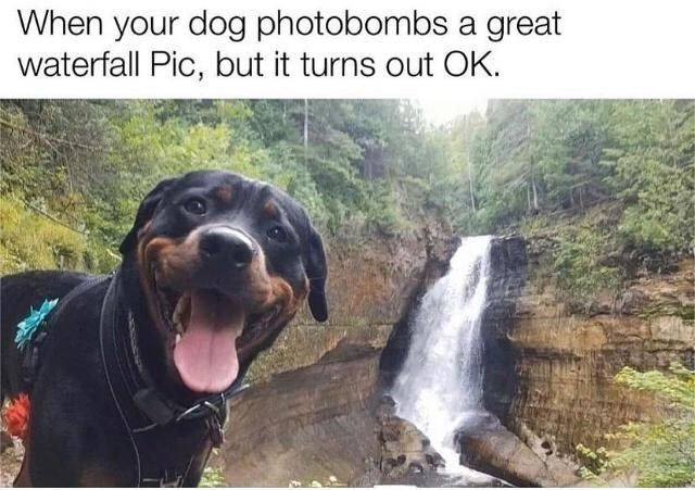 Dog - When your dog photobombs a great waterfall Pic, but it turns out OK.