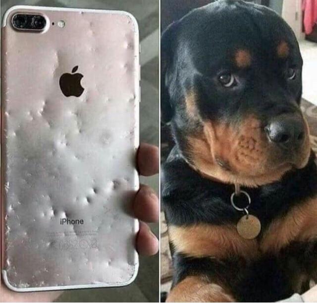 Dog - iPhone
