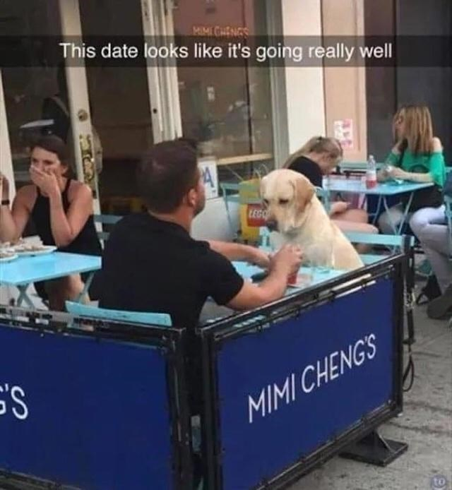 Dog - MIMI CHENGS This date looks like it's going really well LEGO MIMI CHENGS to