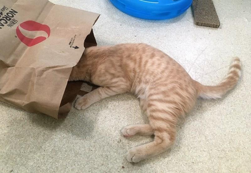 Cat - SERVNG NORC Suce