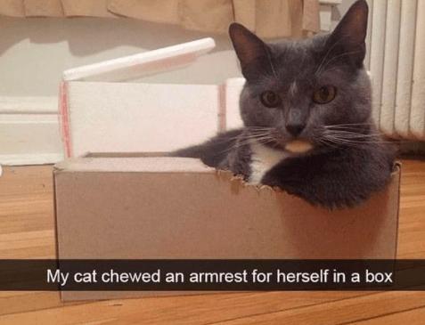 Cat - My cat chewed an armrest for herself in a box
