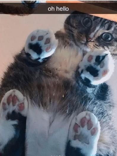 Cat - oh hello