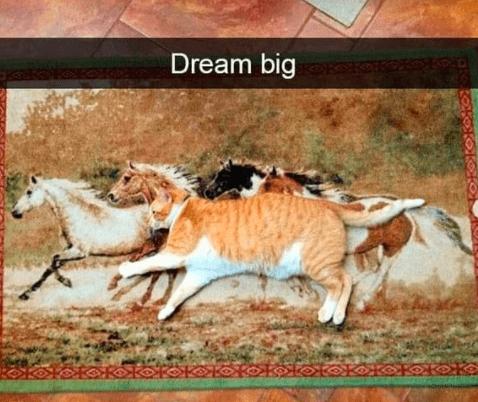 Cat - Dream big