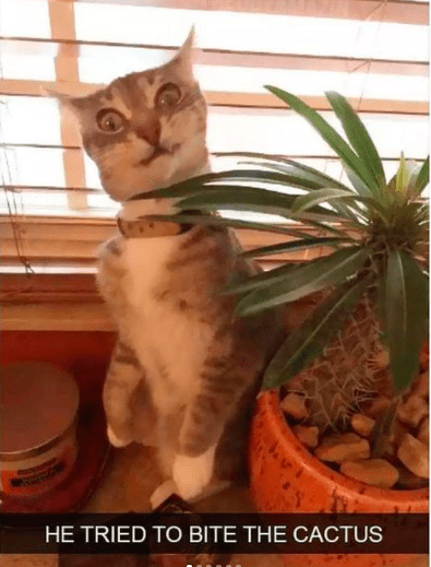 Cat - HE TRIED TO BITE THE CACTUS