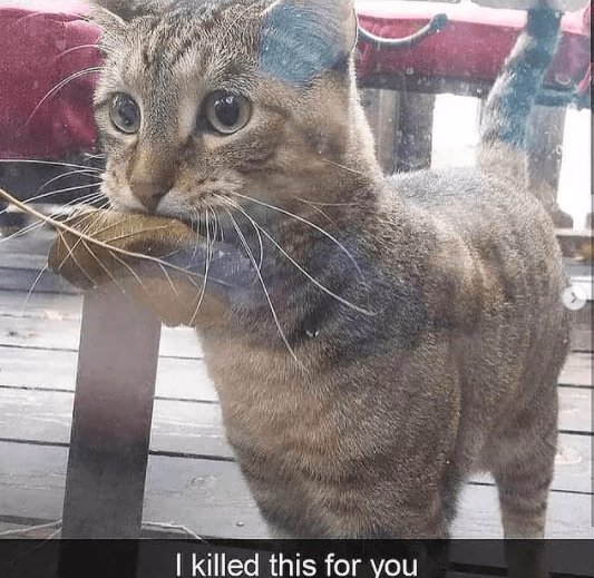 Cat - I killed this for you