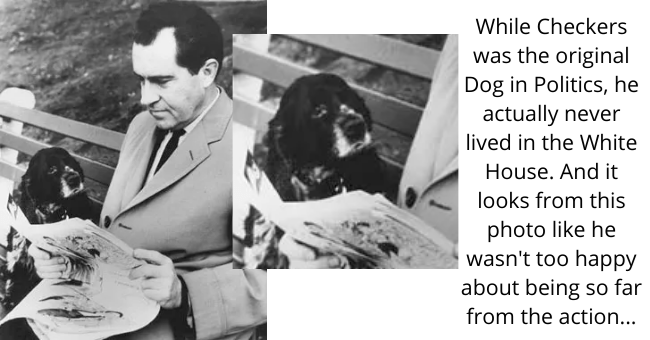 Dog - While Checkers was the original Dog in Politics, he actually never lived in the White House. And it looks from this photo like he wasn't too happy about being so far from the action...