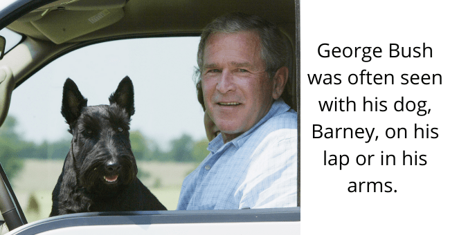 Smile - George Bush was often seen with his dog, Barney, on his lap or in his arms.