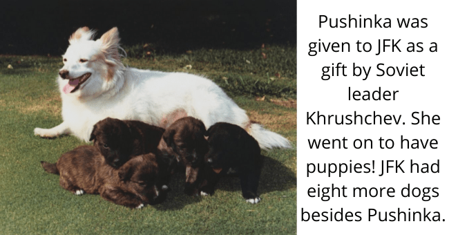 Dog - Pushinka was given to JFK as a gift by Soviet leader Khrushchev. She went on to have puppies! JFK had eight more dogs besides Pushinka.