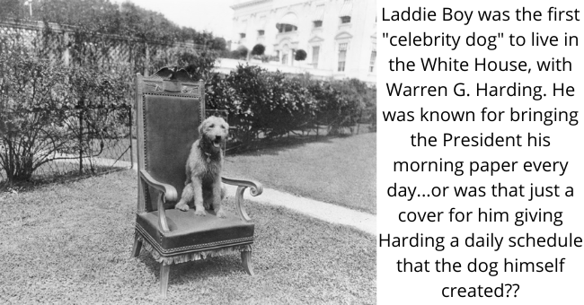 """Dog - Laddie Boy was the first """"celebrity dog"""" to live in the White House, with Warren G. Harding. He was known for bringing the President his morning paper every day...or was that just a cover for him giving Harding a daily schedule that the dog himself created??"""