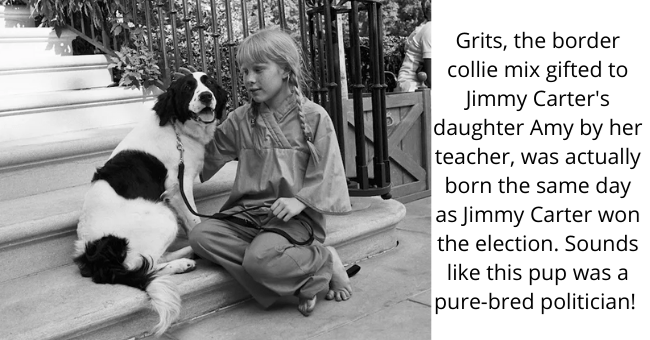 Dog - Grits, the border collie mix gifted to Jimmy Carter's daughter Amy by her teacher, was actually born the same day as Jimmy Carter won the election. Sounds like this pup was a pure-bred politician!